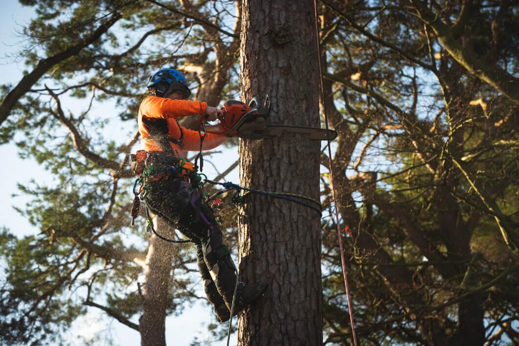 Tree Climbing Equipment
