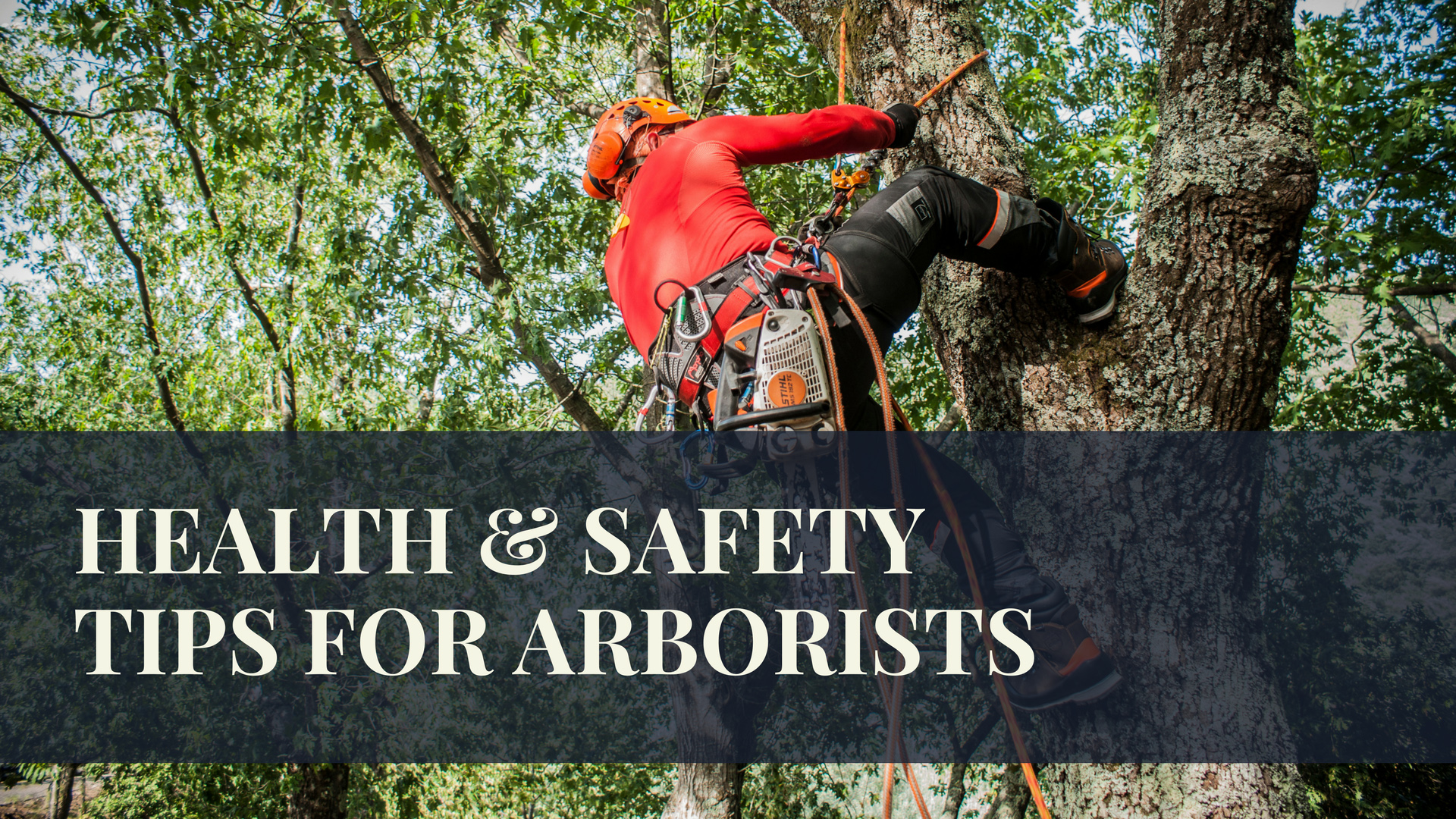 Tips for Arborists