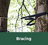 Arborist Bracing