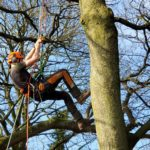 UK's First Arbor Day At Myerscough College